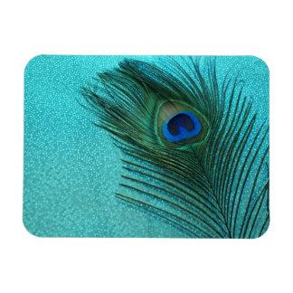 Pluma azul del pavo real de la aguamarina metálica imán foto rectangular