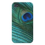 Pluma azul del pavo real de la aguamarina metálica iPhone 4 fundas