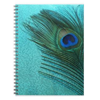 Pluma azul del pavo real de la aguamarina metálica libreta