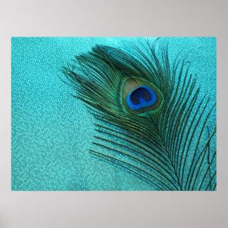 Pluma azul del pavo real de la aguamarina metálica impresiones