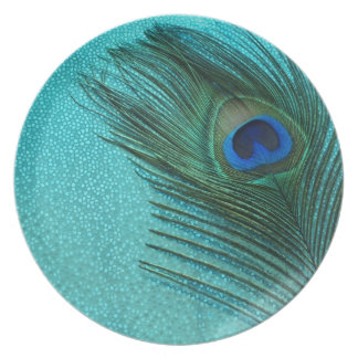 Pluma azul del pavo real de la aguamarina metálica platos de comidas