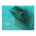 Pluma azul del pavo real de la aguamarina metálica tarjetas postales