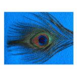 Pluma azul del pavo real del fondo
