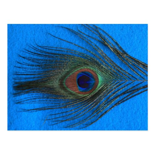 Pluma azul del pavo real del fondo postal