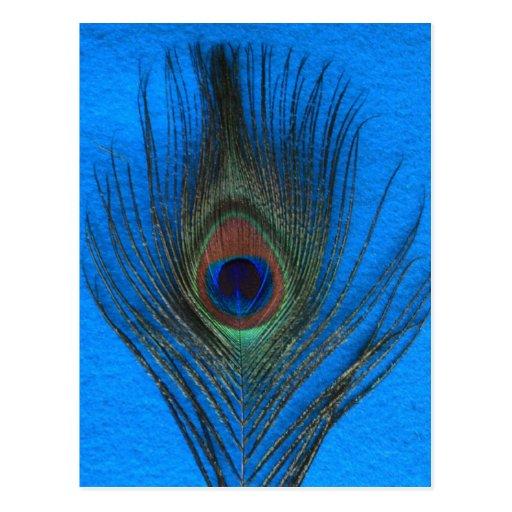 Pluma azul del pavo real del fondo tarjetas postales