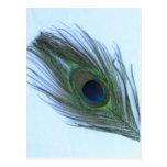 Pluma azul del pavo real postal