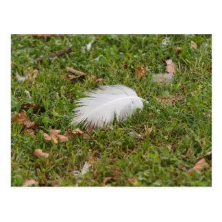 pluma blanca en prado tarjetas postales