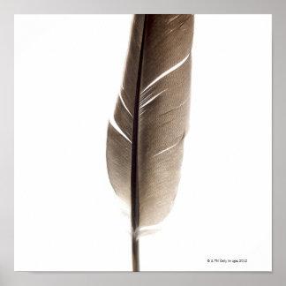 Pluma blanca frágil póster