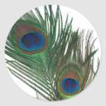Pluma blanca preciosa del pavo real pegatinas redondas