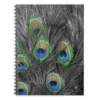 Pluma blanco y negro del pavo real libretas