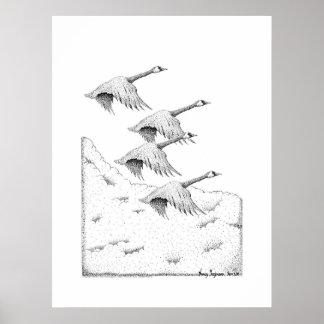 Pluma de los gansos de Canadá del vuelo y dibujo d Póster