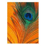 Pluma del pavo real con todavía del brillo vida an postales