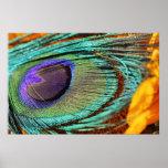 Pluma del pavo real en el girasol poster