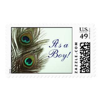 Pluma del pavo real es sellos de un muchacho