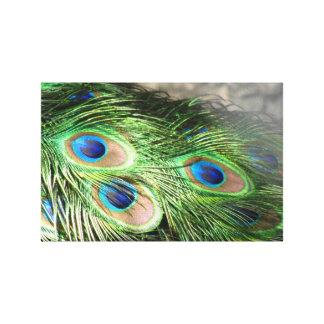 Pluma del pavo real impresion de lienzo