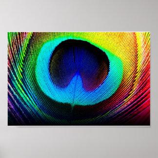pluma del pavo real poster