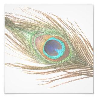 Pluma del pavo real arte con fotos