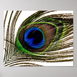 Pluma del pavo real póster