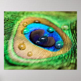 Pluma macra abstracta del pavo real con el poster póster