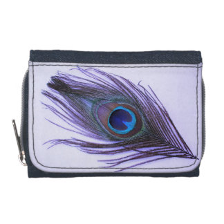 Pluma púrpura del pavo real en púrpura