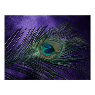 Pluma púrpura sedosa del pavo real poster