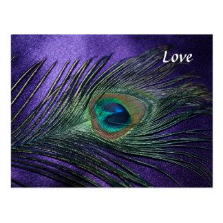 Pluma púrpura sedosa del pavo real postales