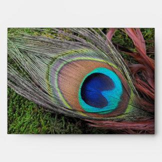Pluma rica del pavo real con el musgo verde