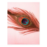Pluma roja del pavo real postales