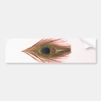 Pluma rosada del pavo real etiqueta de parachoque