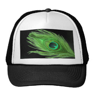 Pluma verde del pavo real en negro gorras
