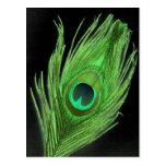 Pluma verde del pavo real en negro postales