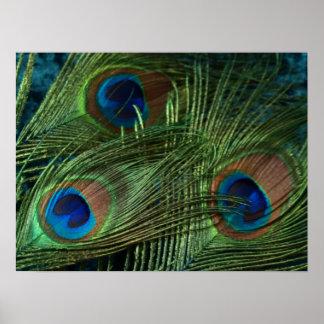 Pluma verde del pavo real poster