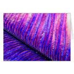 Pluma violeta felicitación