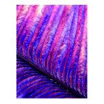 Pluma violeta tarjetas postales