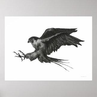 Pluma y tinta blancas del negro del halcón del póster