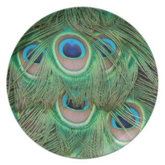Plumaje del pavo real plato