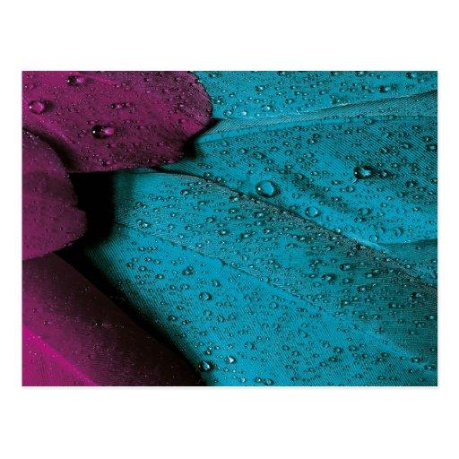 Plumaje oscuro de la orquídea y del trullo tarjeta postal
