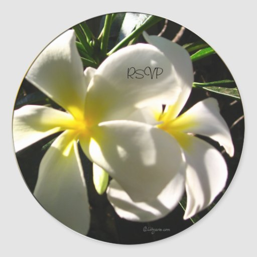 Plumaria blanco RSVP que casa los sellos del sobre Pegatina Redonda