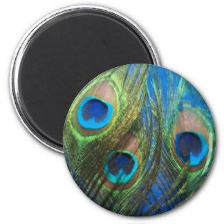 Plumas azules del pavo real imán redondo 5 cm