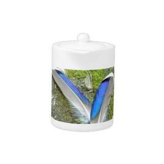 Plumas blancas azules del pato, animal, pájaro