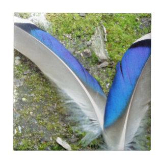 Plumas blancas azules del pato, animal, pájaro azulejo cuadrado pequeño