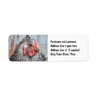 Plumas blancos y negros de la foto linda del pollo etiqueta de remite