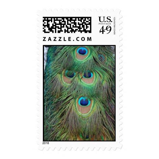 Plumas brillantes e intrépidas del pavo real sello