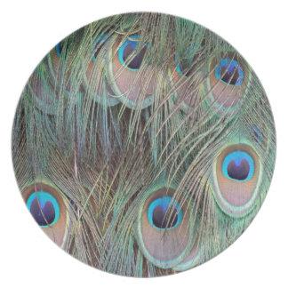 Plumas de cola del Peafowl Plato De Comida