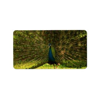 plumas de extensión mismo de un pavo real del etiquetas de dirección