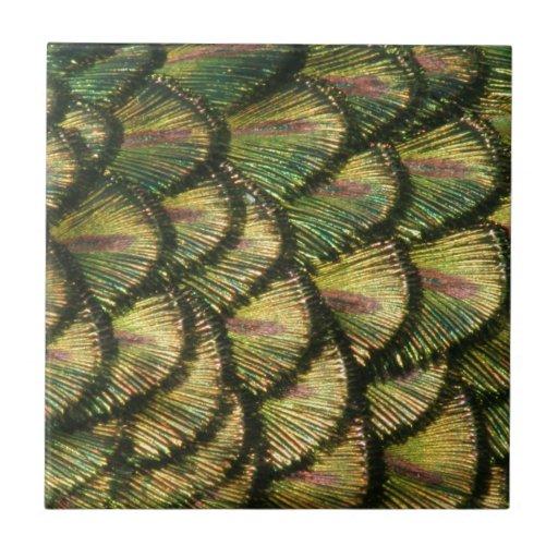 Plumas de oro del pavo real azulejo cuadrado pequeño
