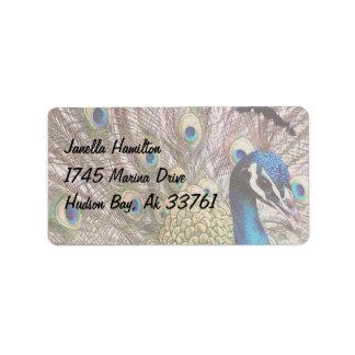 Plumas del animal de la fauna del pájaro del pavo etiquetas de dirección