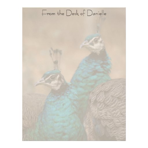 Plumas del animal de la fauna del pájaro del pavo membrete a diseño
