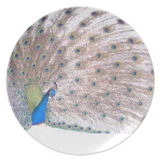 Plumas del animal de la fauna del pájaro del pavo plato para fiesta