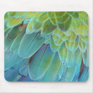 Plumas del loro del Macaw Alfombrilla De Ratón